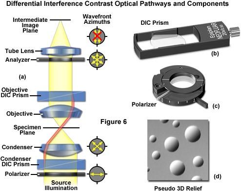 Nguyên ly kính hiển vi trương DIC