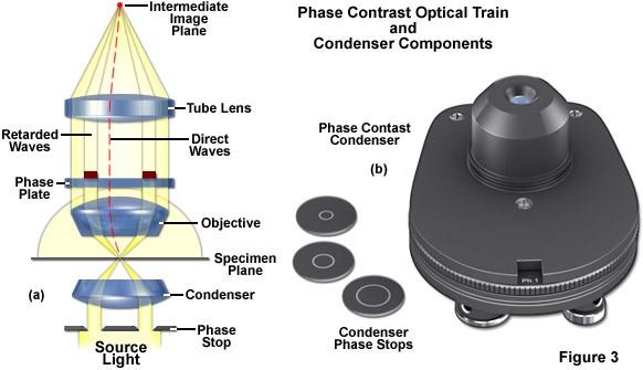 nguyên lý kính hiển vi phân cực