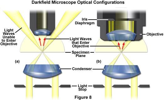 nguyên lý kính hiển vi trường tối