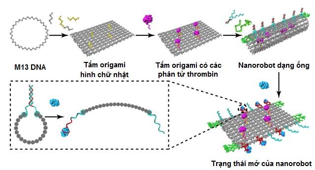 Tiêu diệt tế bào ung thư bằng Nano Robot