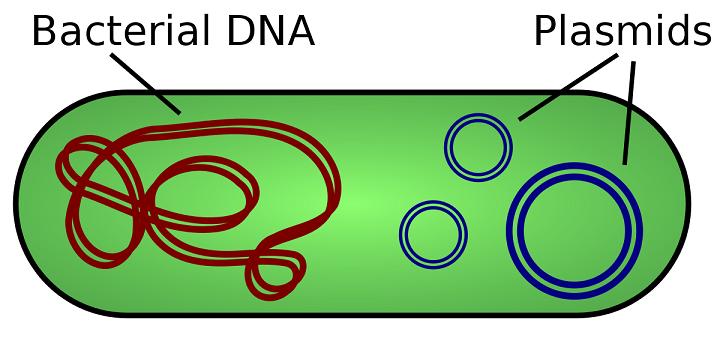 cách nhận biết các dạng plasmid